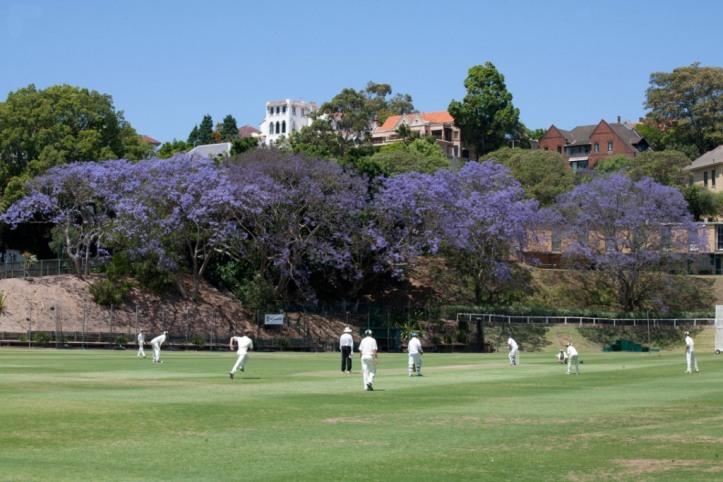 Cranbrook-Cricket
